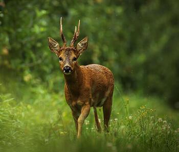 Jagdgenossenschaft Fockendorf
